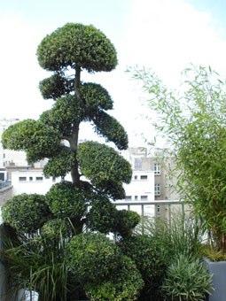 Un jardinier paysagiste am nage votre jardin terrasse - Amenagement paysagerjardins exceptionnels a decouvrir ...